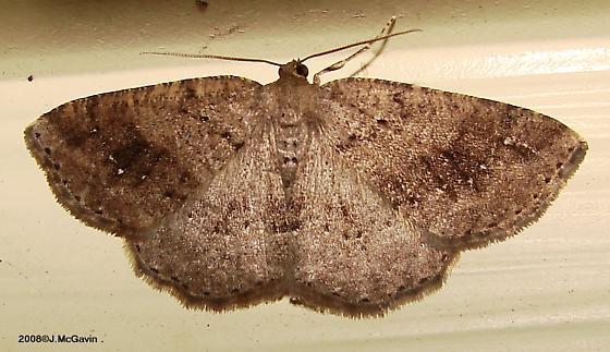Unk Moth May 1 c - Homochlodes