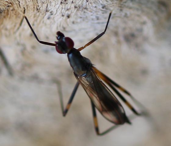 On dead wood - Rainieria antennaepes