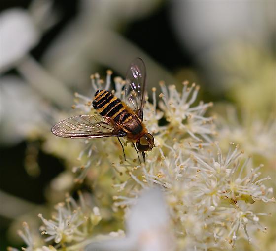 flying, bee like - Villa