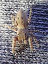 Terralonus female - Terralonus - female