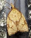 Reticulated Fruitworm Moth - (Clemens, 1860) - Cenopis reticulatana