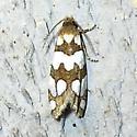 Pelochrista quinquemaculana