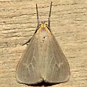 Pagara simplex