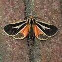 Hodges #8170 - Banded Tiger Moth - Apantesis vittata