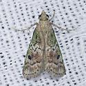 5639 - Cacotherapia unipuncta