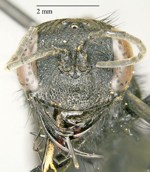 Sphecidae sp.? - female