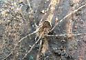 spider011420