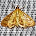 Unknown Moth - Crocidophora tuberculalis