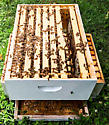 Extracting honey from a hive - female