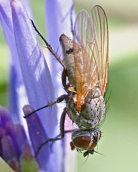 Fly ~6mm