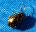 Some kind of bronze beetle? - Psylliodes