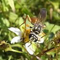 Thread-waisted Wasp maybe Sphex? - Sphex ichneumoneus