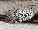 Sphinx Moth? - Hypercompe scribonia