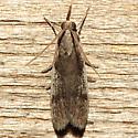 Peoria longipalpella