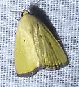 Marimatha nigrofimbria Black-Bordered Lemon Moth - Marimatha nigrofimbria