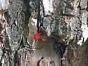 Mite Explores a Tree