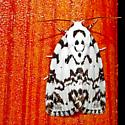 black and white moth - Polygrammate hebraeicum