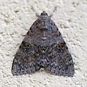 Catocala black speckles, gold around black spot - Catocala junctura