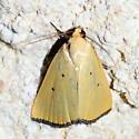 Please help us to identify this gem. - Marimatha nigrofimbria