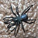 shiny black spider - Ummidia