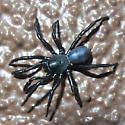 shiny black spider - Ummidia