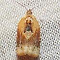 3597 Red-banded Leafroller - Argyrotaenia velutinana