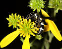 Some kind of a wasp? - Pseudodynerus quadrisectus