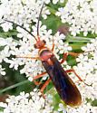 Spider Wasp - Tachypompilus ferrugineus - male