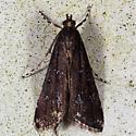 Black Langessa Moth - Langessa nomophilalis