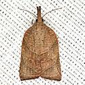 Omnivorous Platynota Moth - Hodges #3745 - Platynota rostrana - female