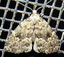 09/25/19 moth - Dyspyralis illocata