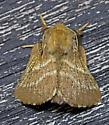 MothEasternTentCaterpillar_Malacosoma_americana06152017_CM - Malacosoma americanum - male