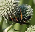 Large wasp - maybe Sphex nudus - Sphex nudus - female