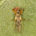 hybotid dance fly? with prey