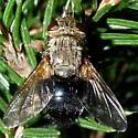 fly - Archytas