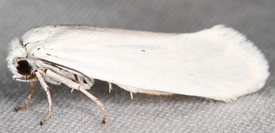 Prodoxinae?