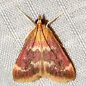 Raspberry Pyrausta - Pyrausta signatalis