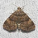 Richards' Fungus Moth - Hodges#8505 - Metalectra richardsi