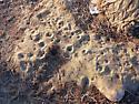 Ant Lion Pits - Myrmeleon