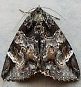 Euparthenos nubilis (Locust Underwing) - Euparthenos nubilis