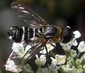 Bee Fly - Villa