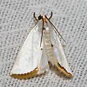 Snowy Urola Moth - Hodges#5464 - Urola nivalis
