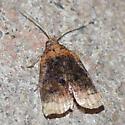 Moth 1 - Platynota flavedana