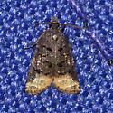 Hodges#3741 - Platynota semiustana - male