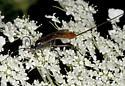 Wasp ZH3Z2795 - female