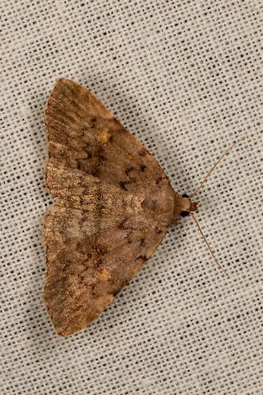 Moth - Idia