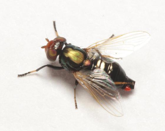 Acariformes, feeding