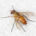 Big Fly - Leskia - female
