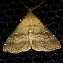 Sober Renia Moth - Hodges #8387 - Renia sobrialis