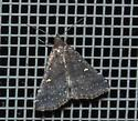 black moth with ruddy-colored eyes - Tetanolita mynesalis